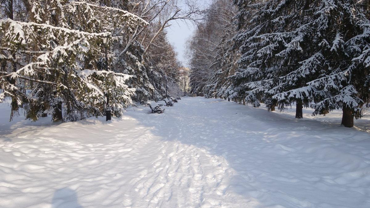 Зимний парк - Елена