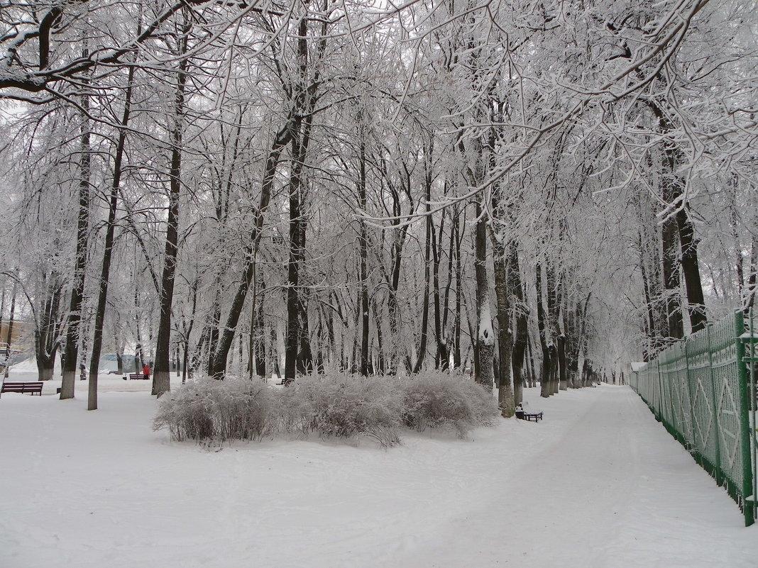 В парке городском . - Святец Вячеслав