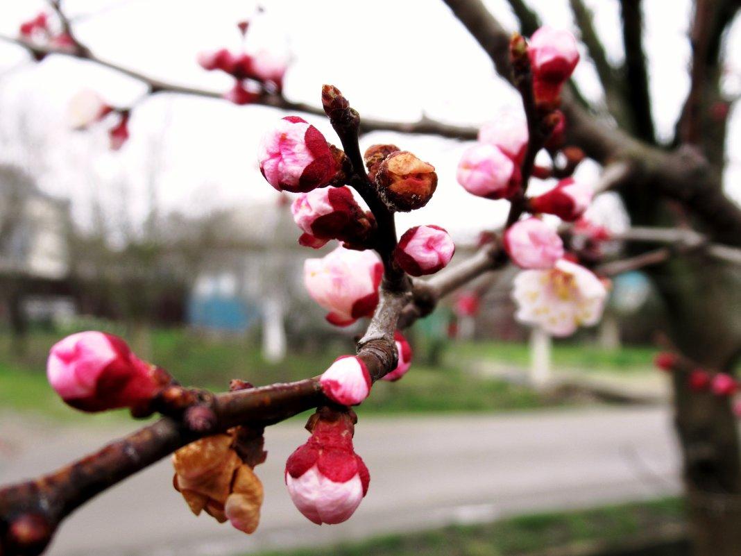 Весна...  Такая разная.... - Вячеслав Медведев