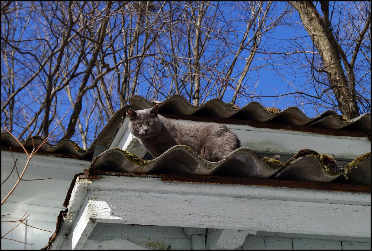 Прогулка по крышам. - сергей лебедев