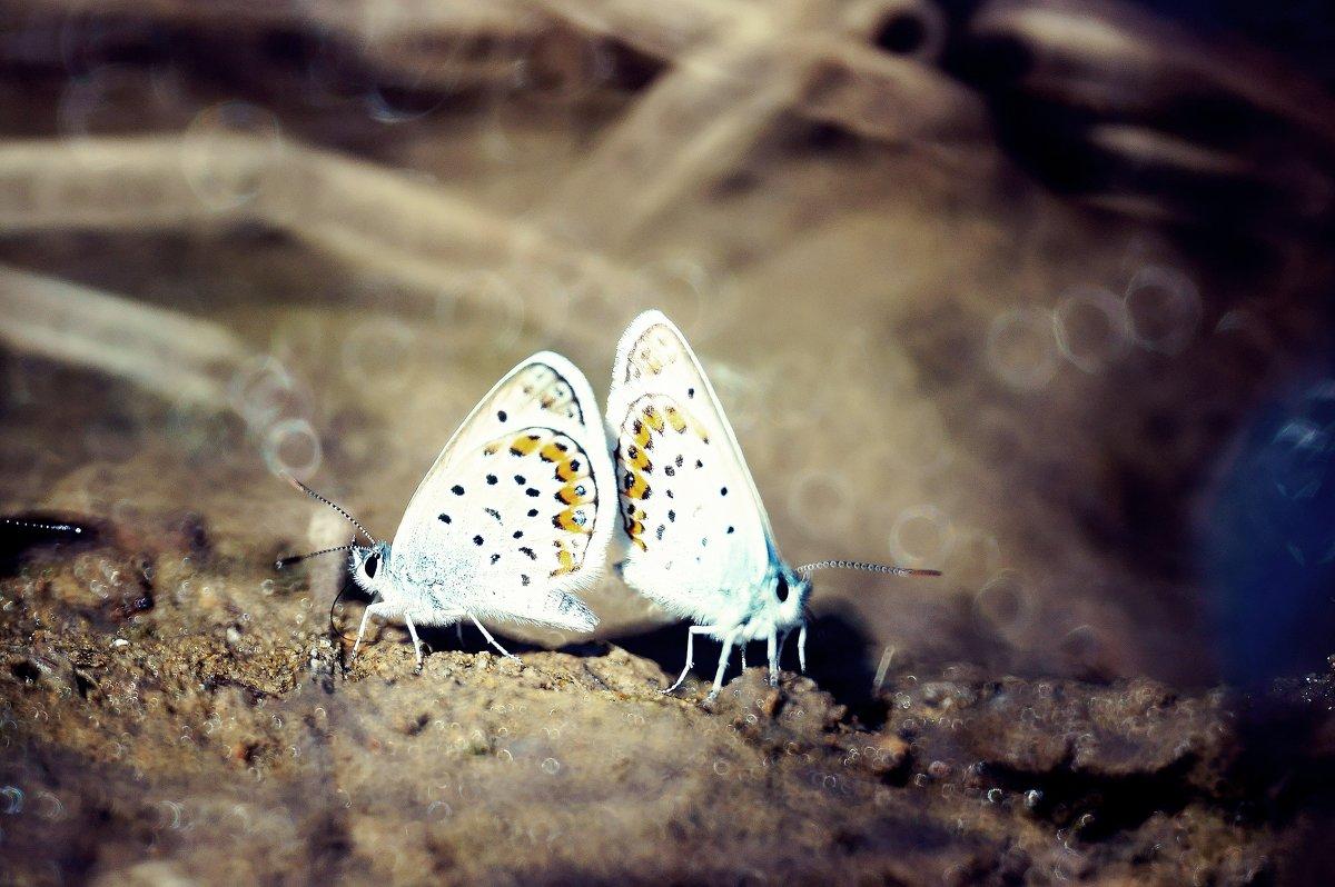 Природа - Стас