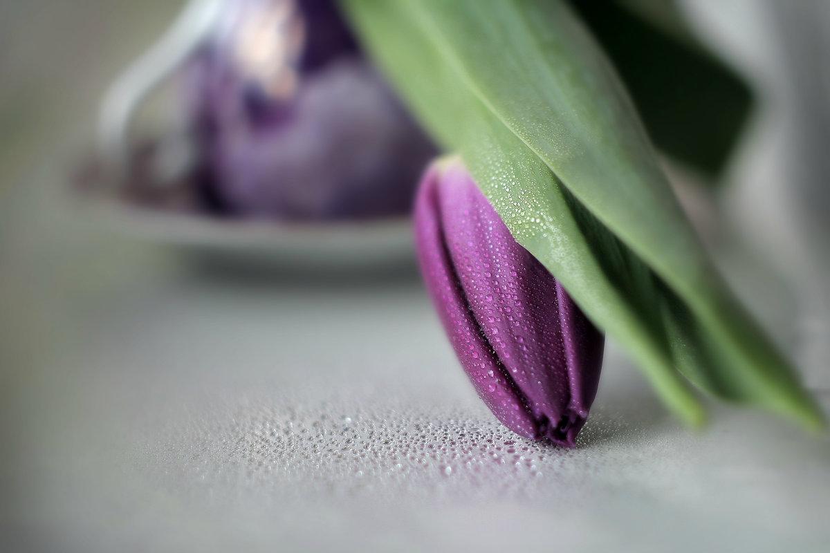 Тюльпан - Lusi Almaz