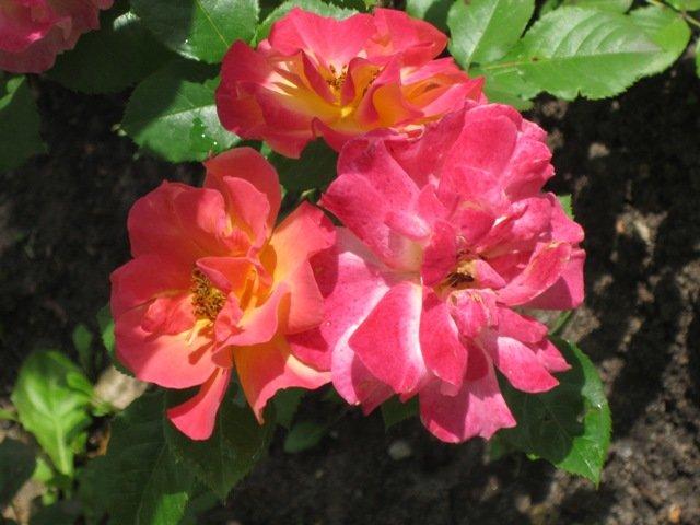 Необычные цветы - Дмитрий Никитин