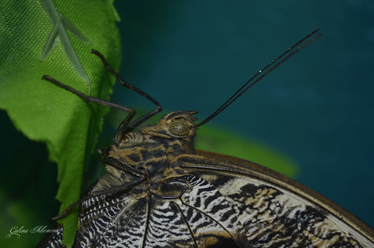 Про бабочку - galina tihonova