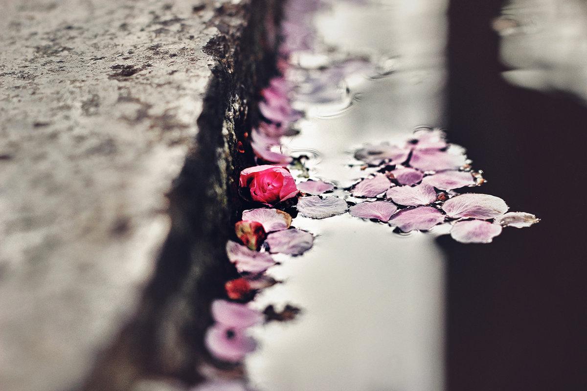 В быстро вянущих лепестках цветка больше жизни, чем в грузных тысячелетних глыбах гранита. - Лилия .