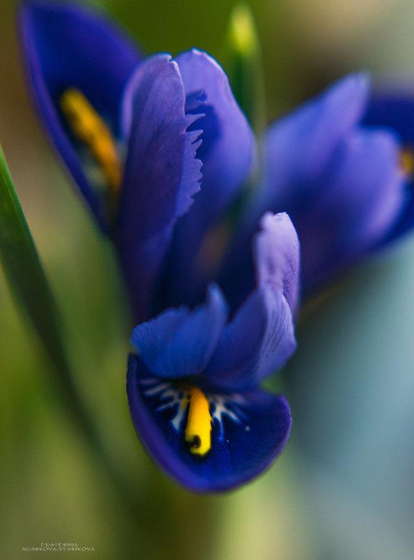 запахло весной - Екатерина Агаркова