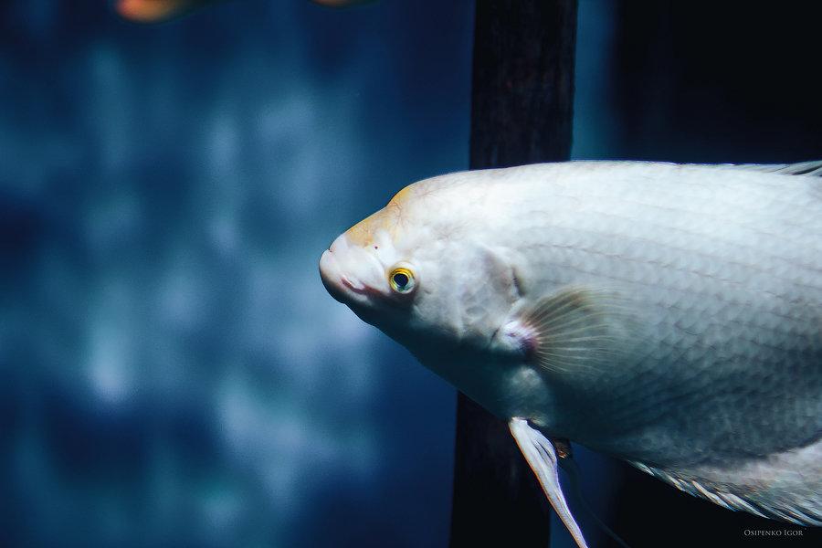 рыбёшка - Игорь Осипенко