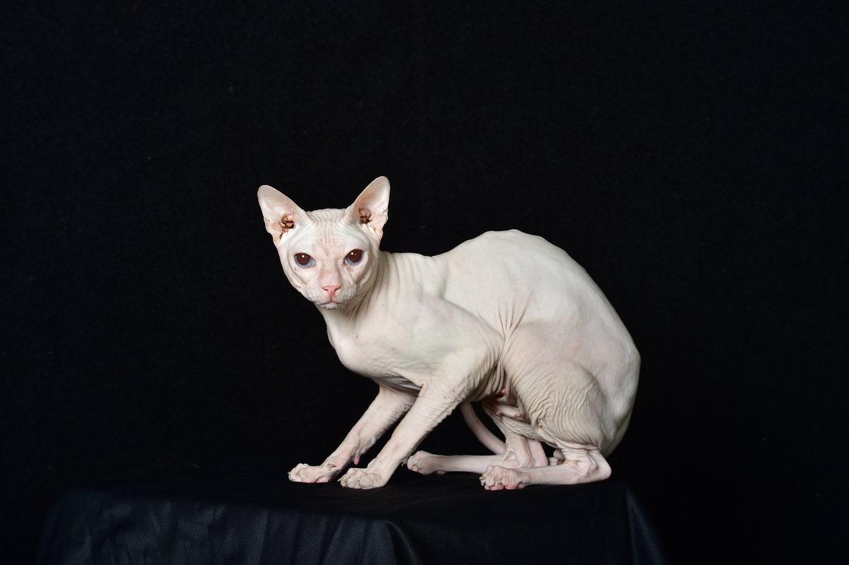 Кошки - Виктор Твердун