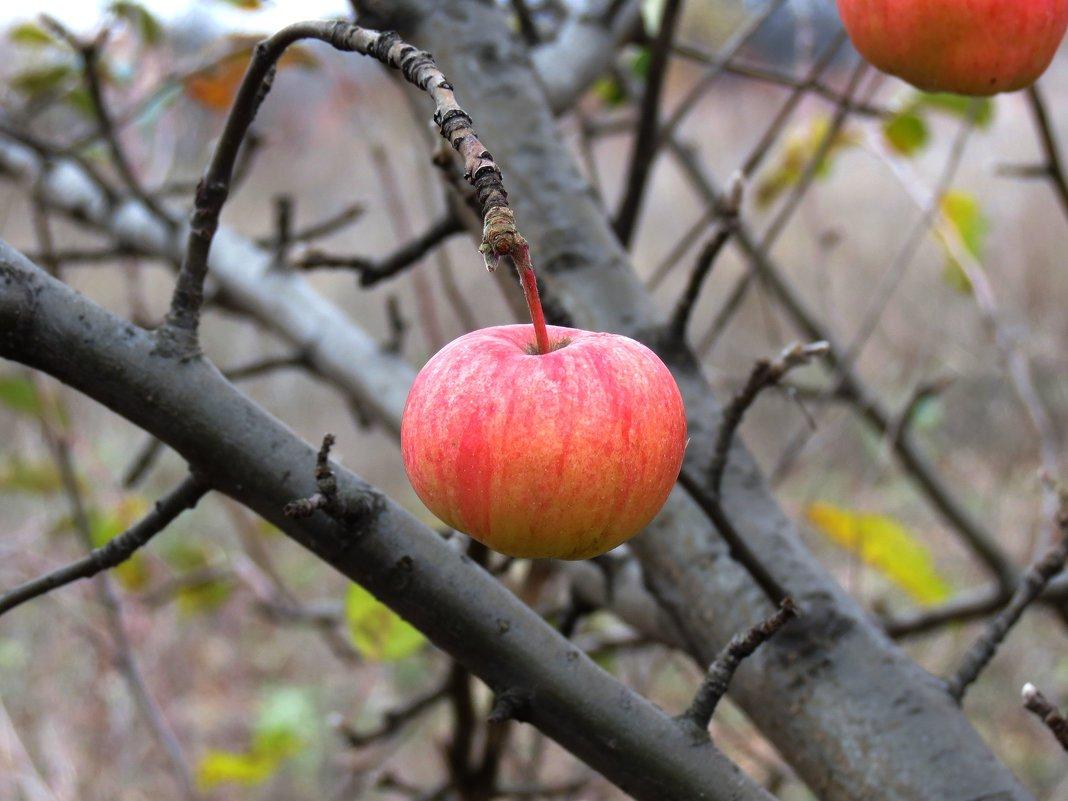 Осенний плод. - Владимир Усачёв