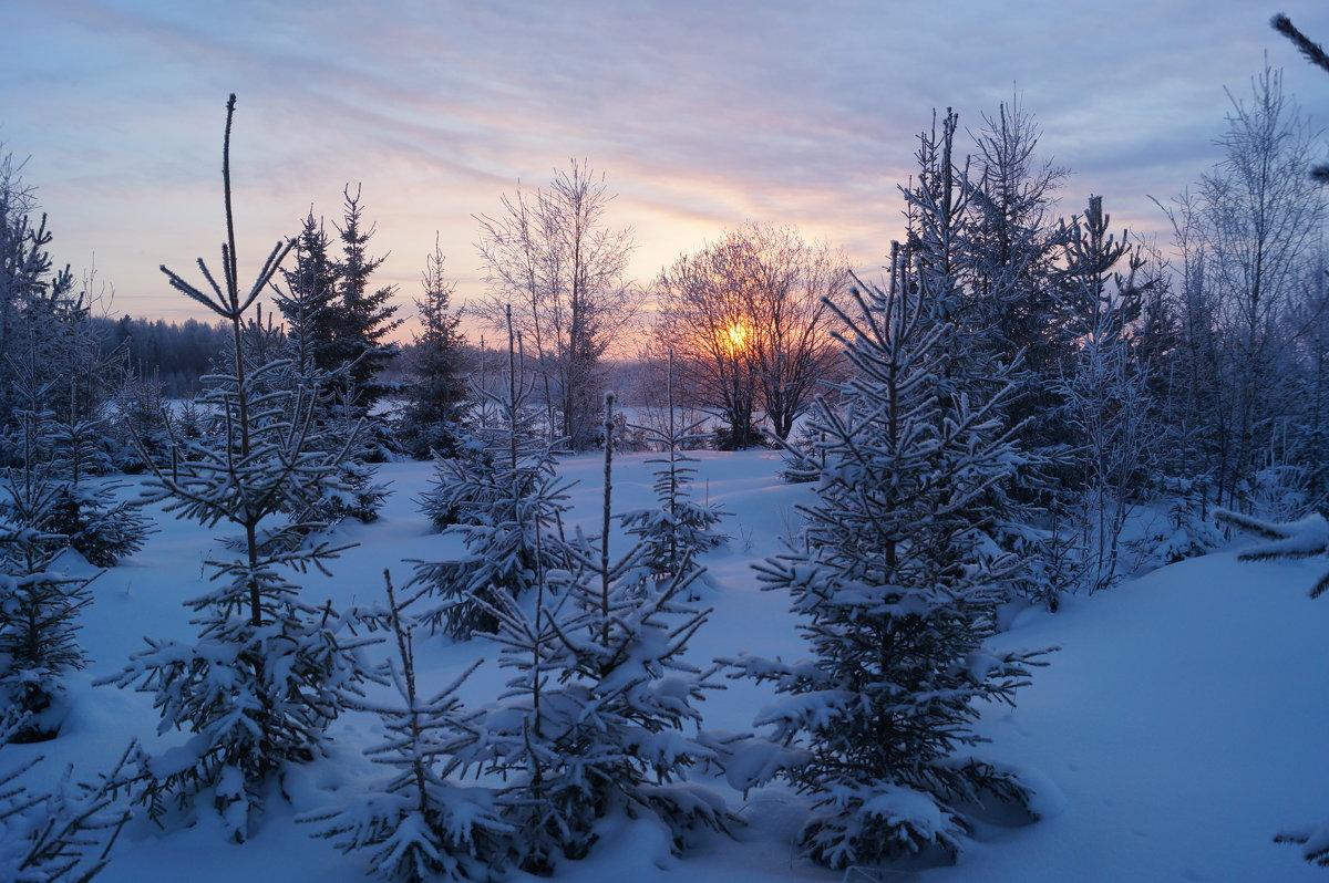 Морозное утро - Sergey Chelishev