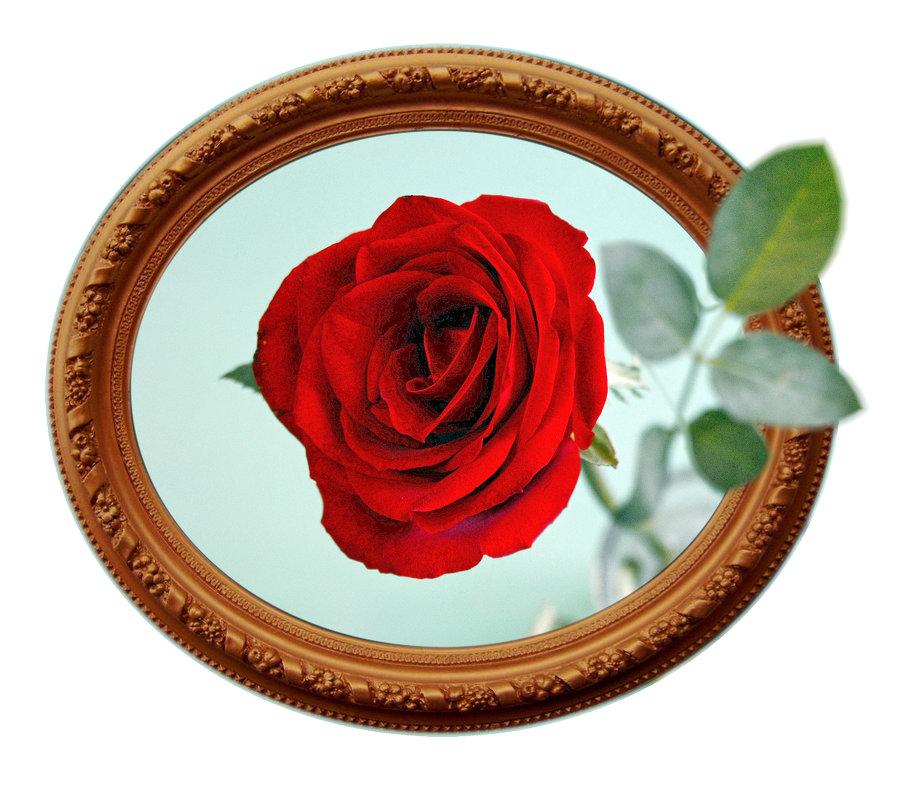 Роза - Анатолий Чикчирный