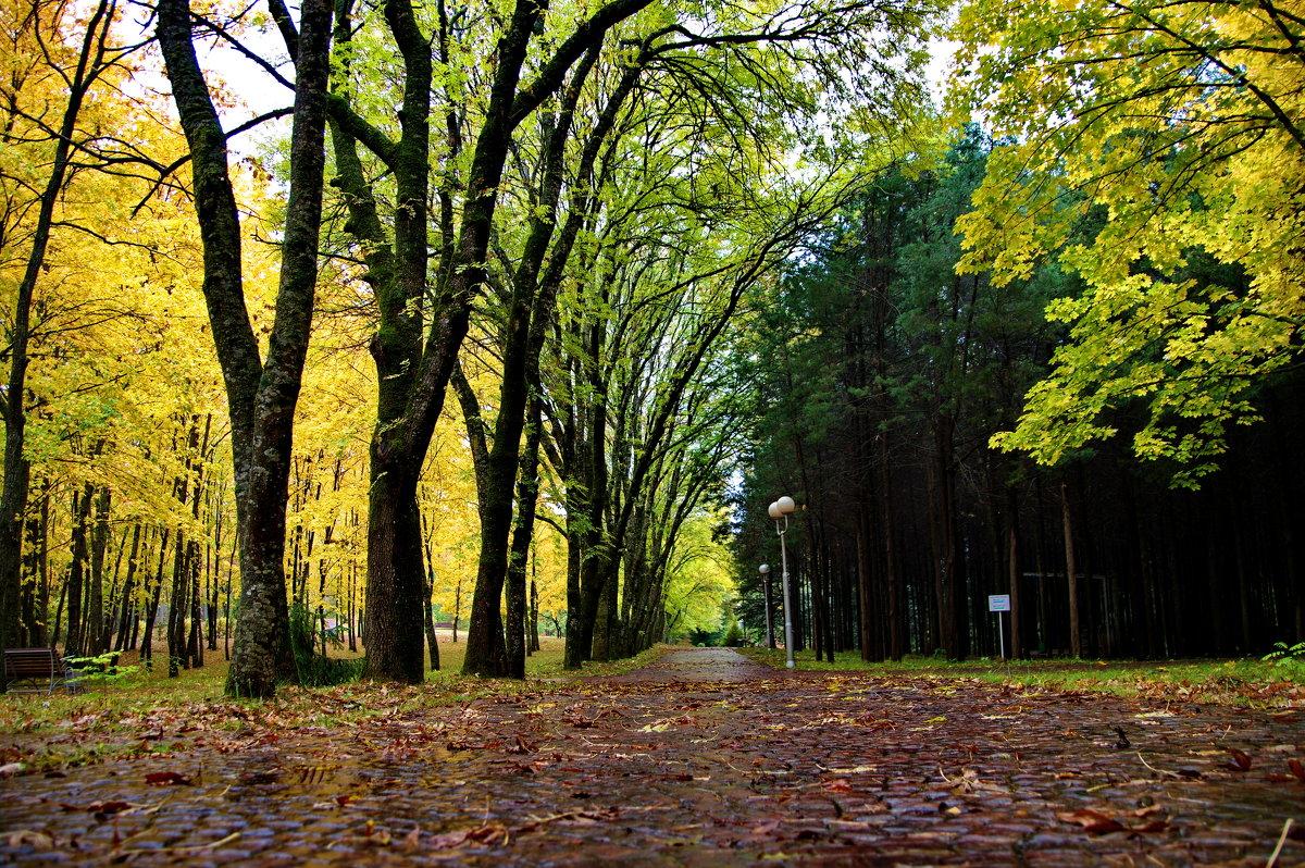 Осень в парке - Михаил Сипатов