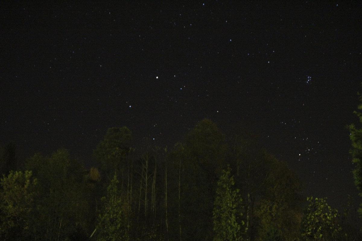 Звёздная ночь в лесу - Анатолий Кувшинов