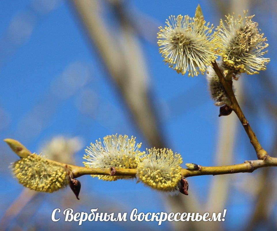 *** - Галина .