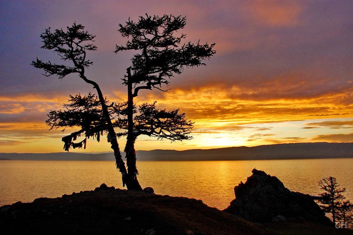 Хужир. Дерево желаний на закате - Сергей Никитин