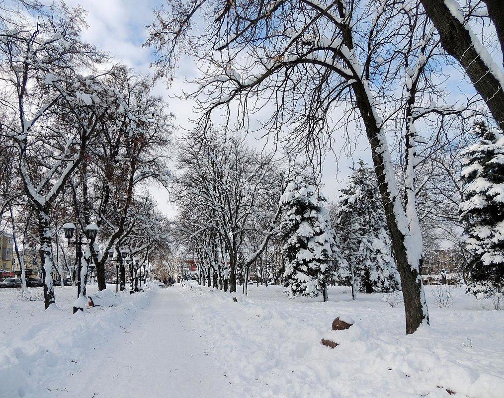 Зимний парк - Роман Савоцкий