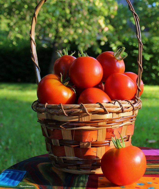 Любителям помидорок! - Татьянка *