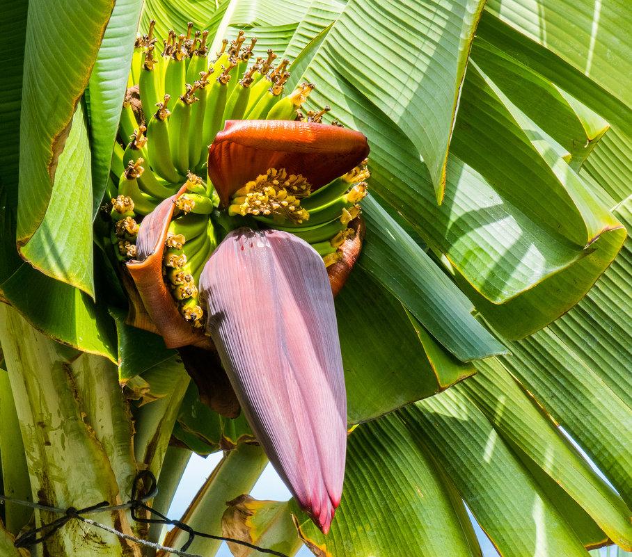 Так цветет банановая пальма - Андрей Данилов