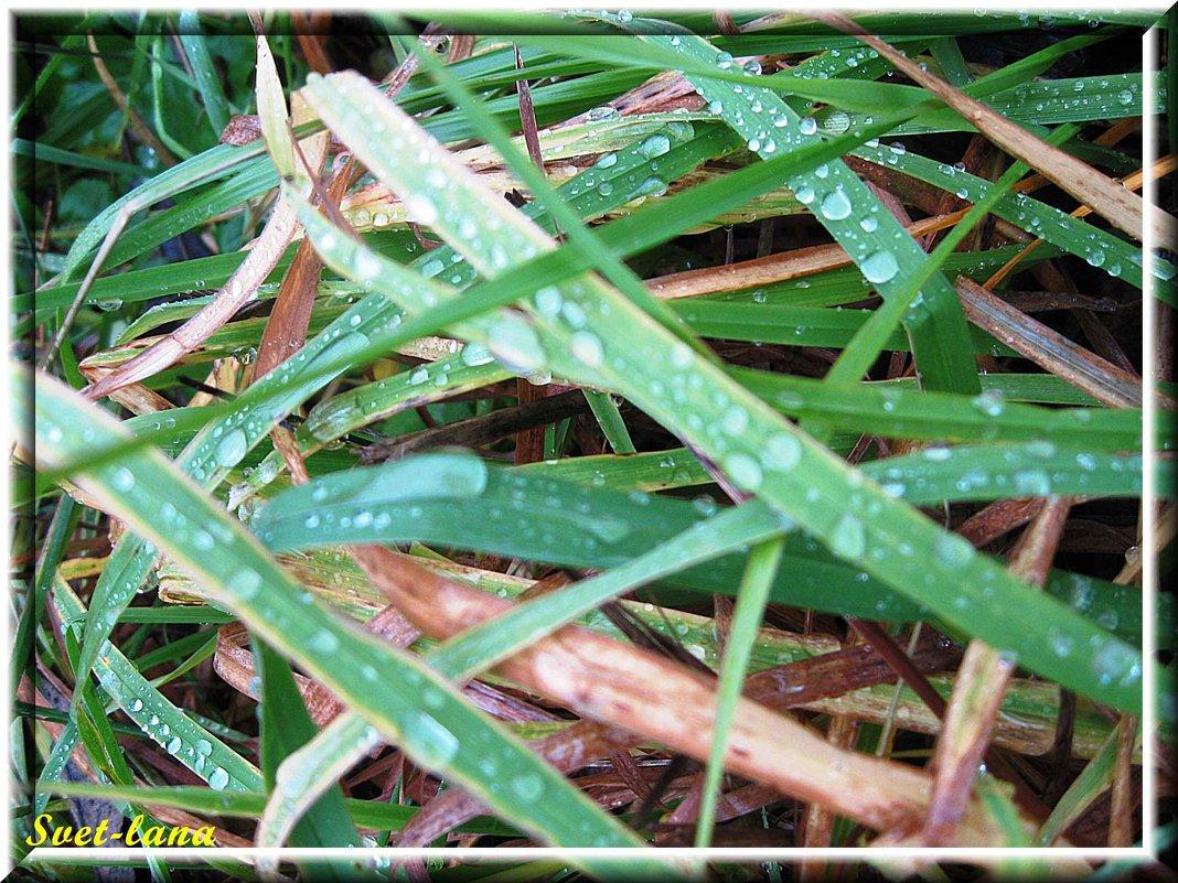 Капли на траве - swetalana Timofeeva