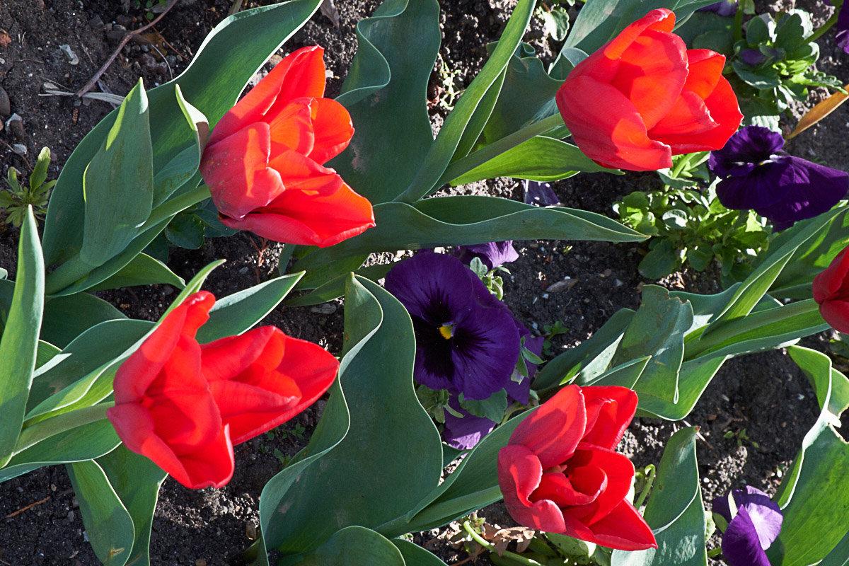 Цветы 2 - Валерий Дворников