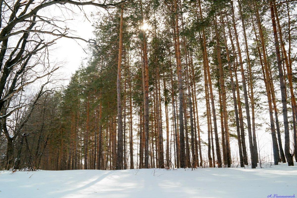 И светел лес в апрельском солнце.. - Андрей Заломленков