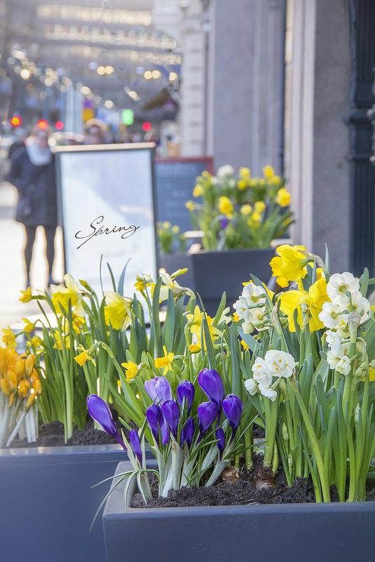 Весна в городе. - Bosanat