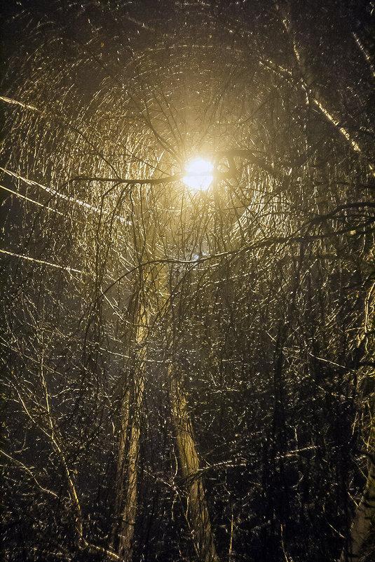 дерево и фонарь - Геннадий Свистов