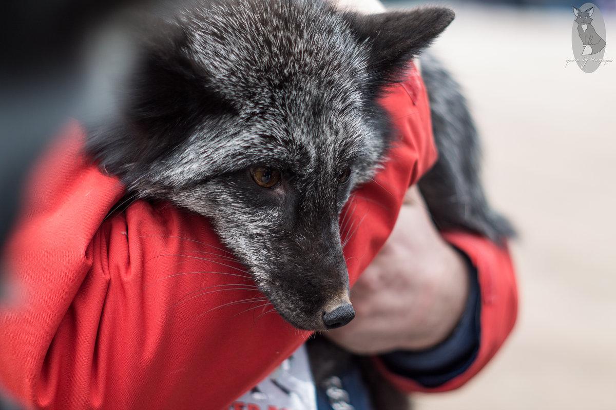 Owl_Fox DAY - Юля Грек