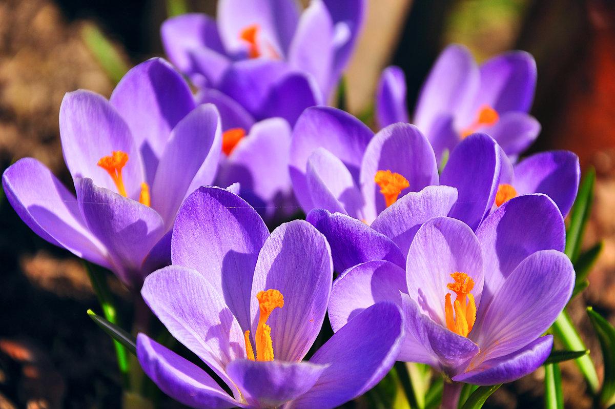 Яркая весна. - Марина