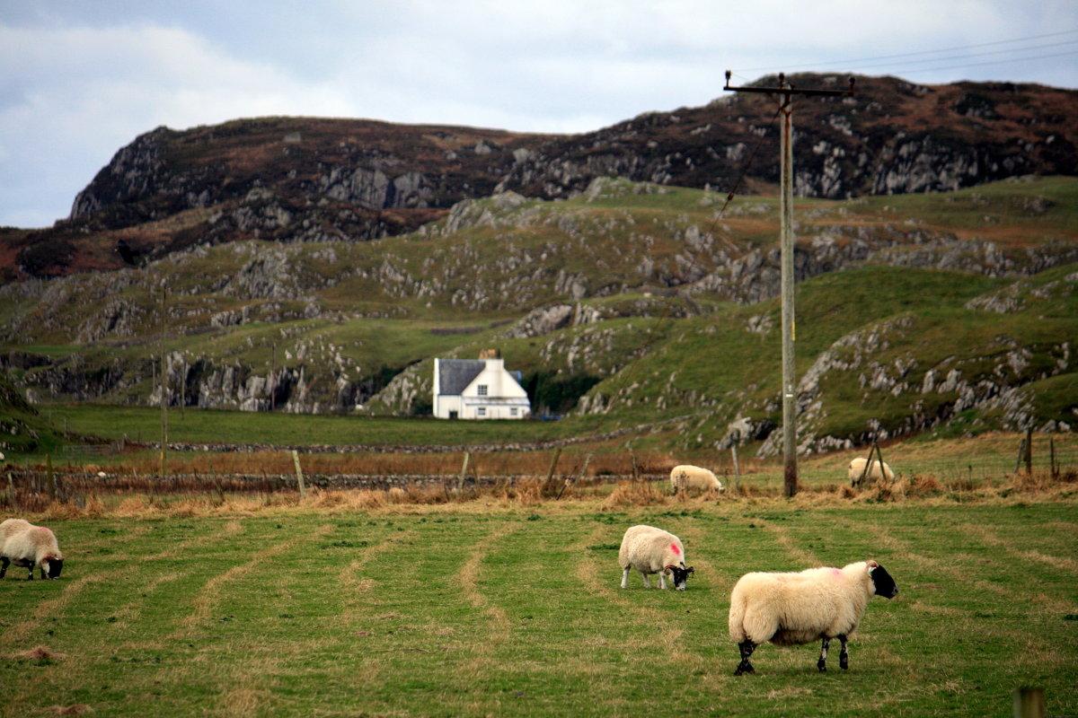 Рразззз овечка, два овечка....;-) - Olga