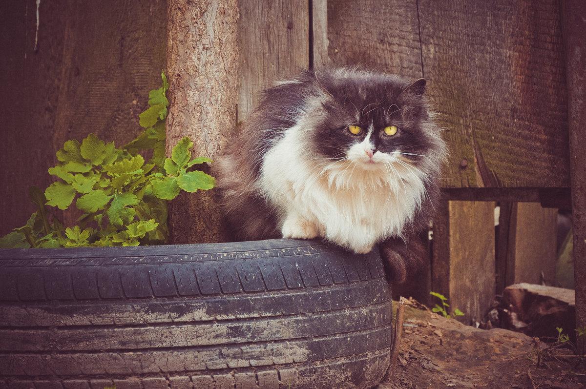 Бездомный кот - Максим Журба