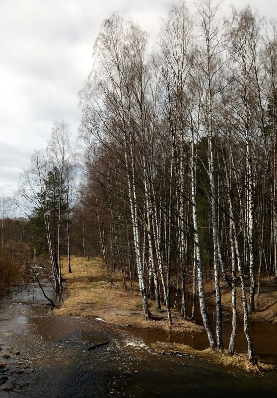 Лесопарк. 22 апреля - Елена Павлова (Смолова)