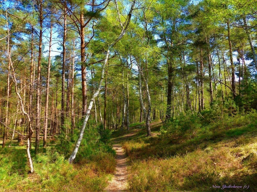 Тропинка в лесу - Nina Yudicheva