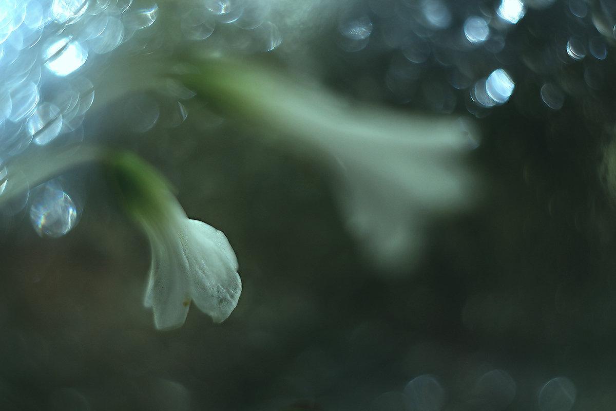 Волшебные пузырьки ))) - Елена Баландина