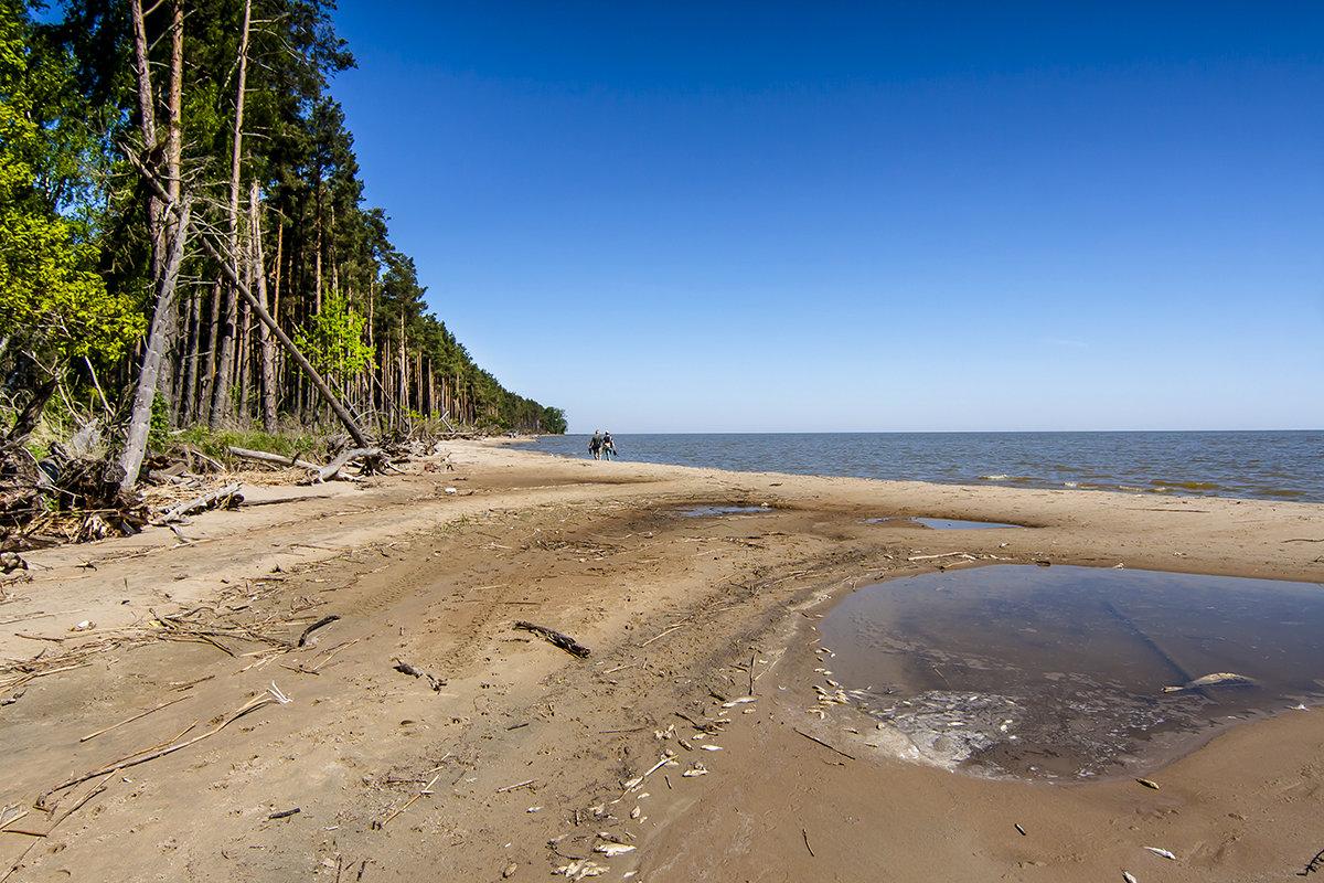На берегах Куршского залива - Lusi Almaz
