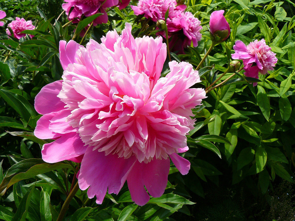 Воздушная красота цветка . - Александр