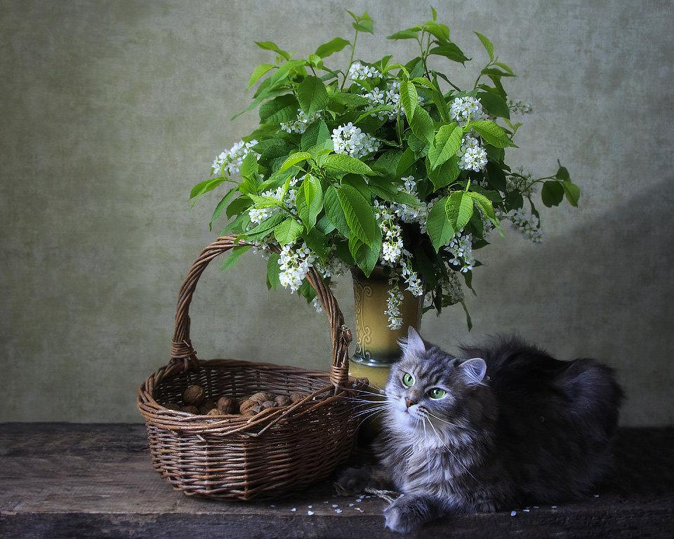 Про черемуху, Масяню и майских жуков - Ирина Приходько