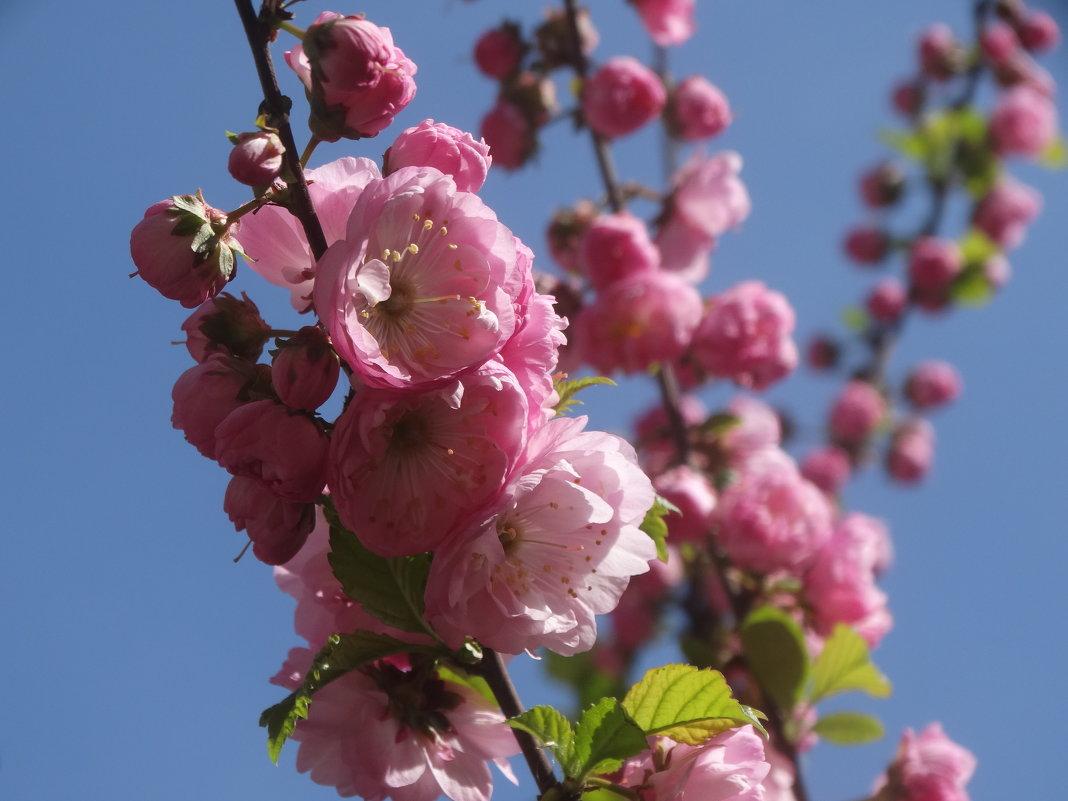 Салют весне... - Тамара (st.tamara)
