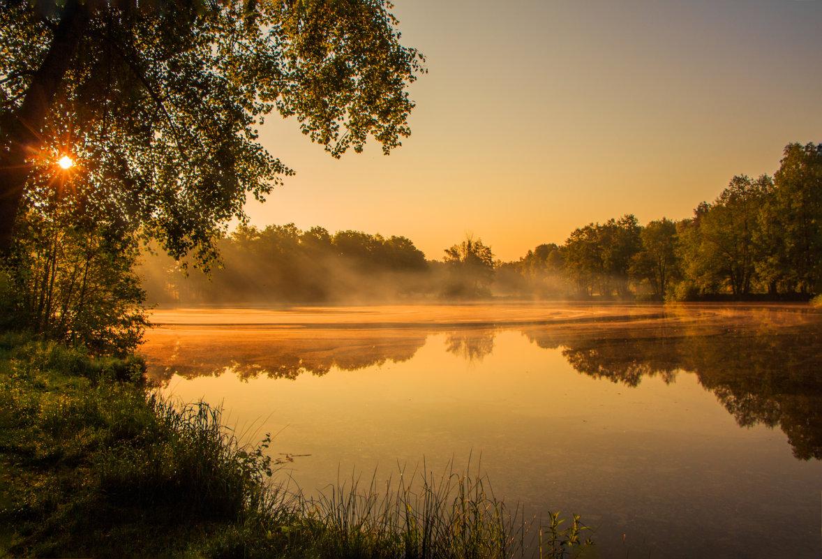 Утром у пруда. - Waldemar F.