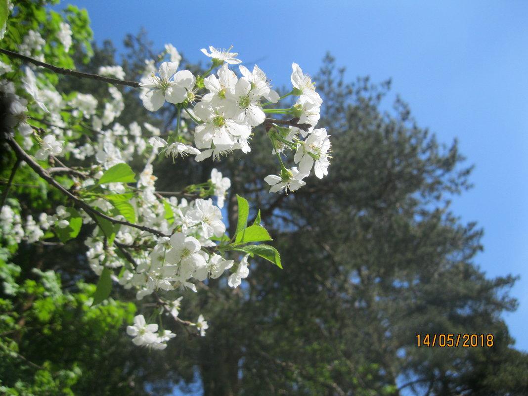 Весна - Smit Maikl
