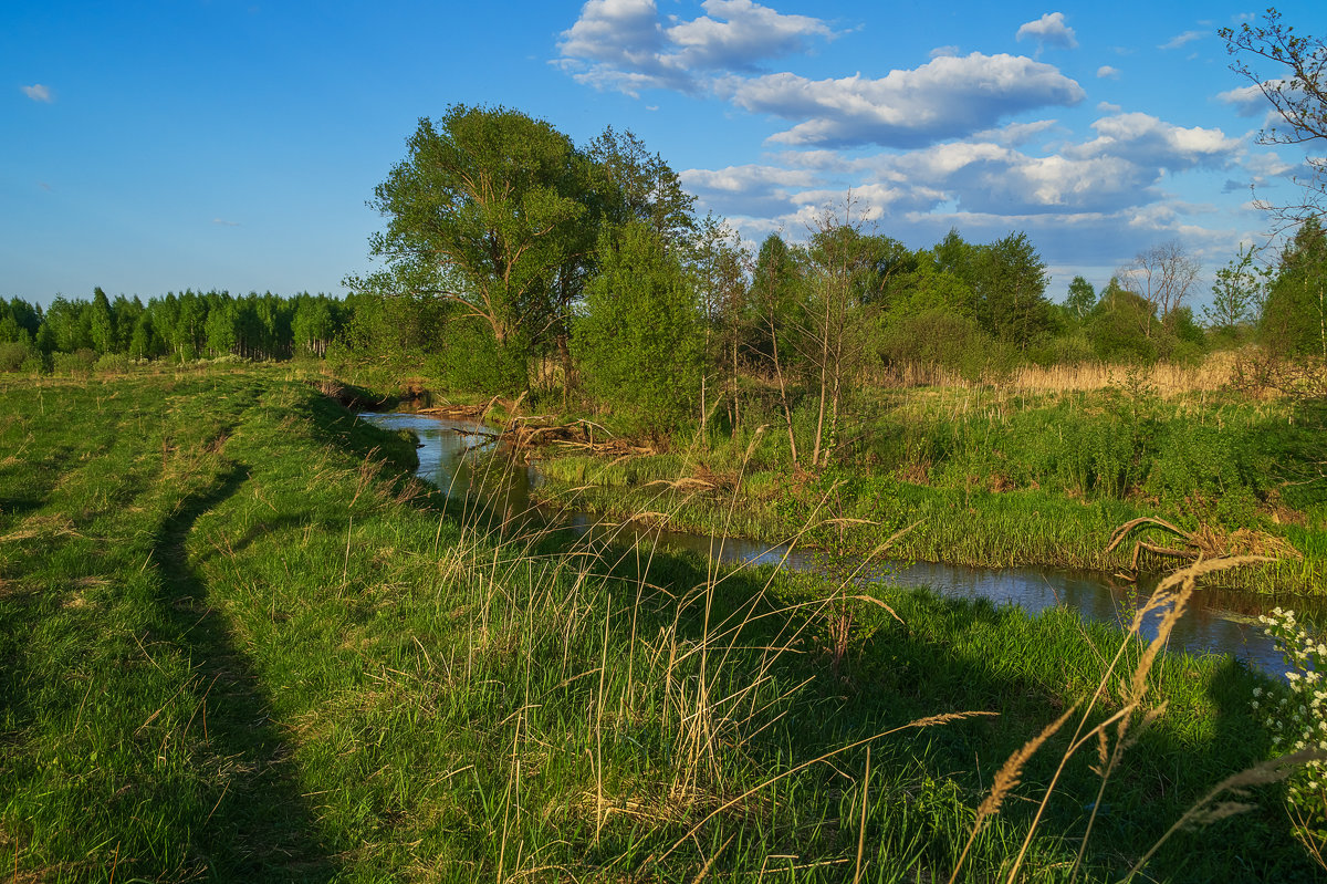 Майский вечер 4 - Андрей Дворников