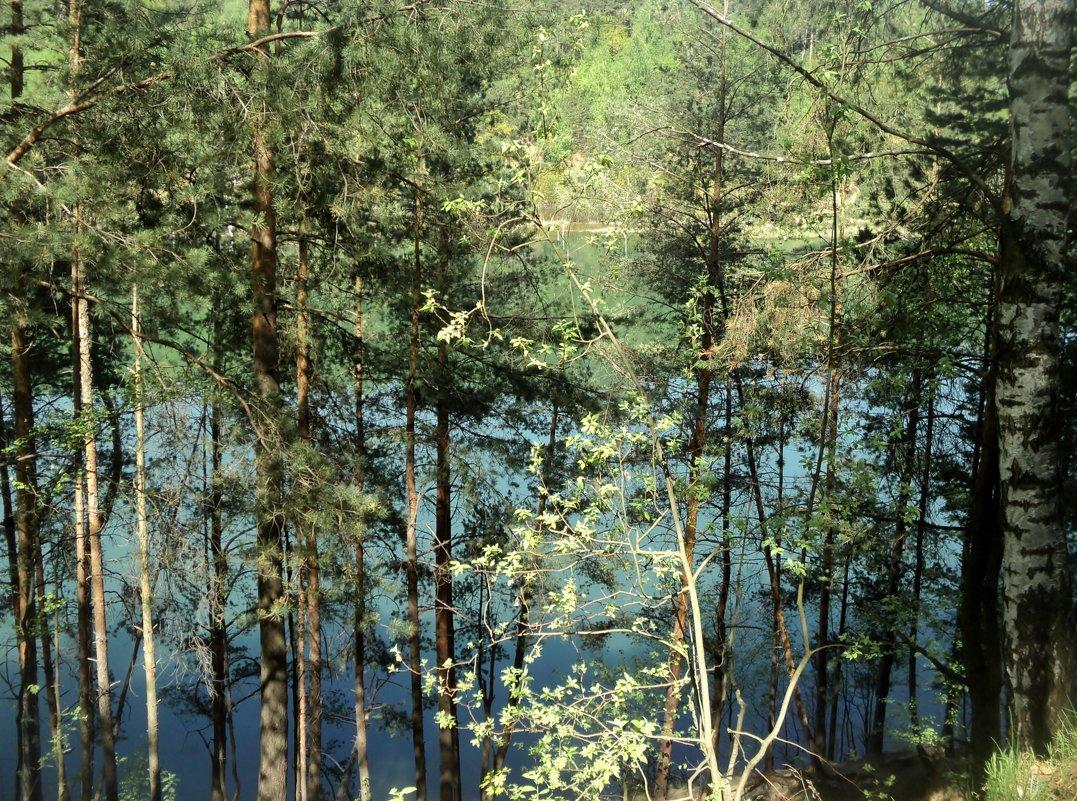 Может знает лес... - Ольга Кривых