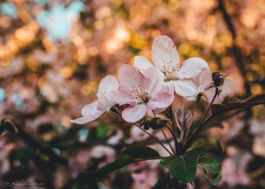 цветение - Ольга (Кошкотень) Медведева
