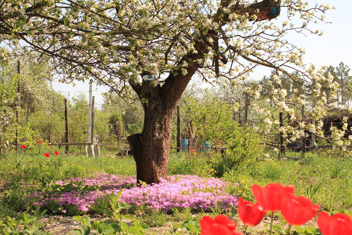 Весна на даче - Gen Vel