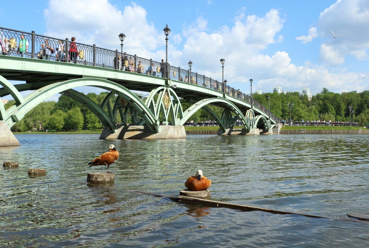 Мост - Андрей