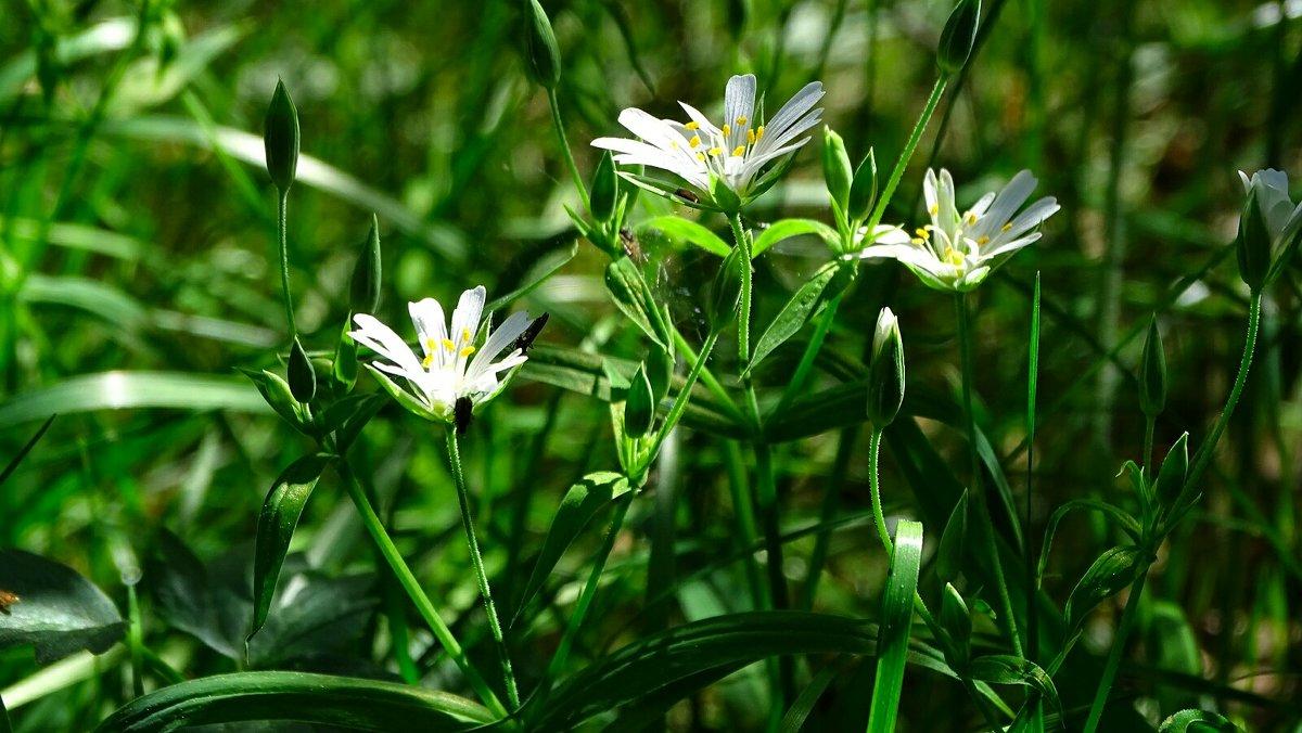 Ещё цветут весенние цветы - Милешкин Владимир Алексеевич