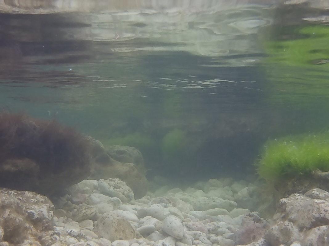 морское дно - Giant Tao /