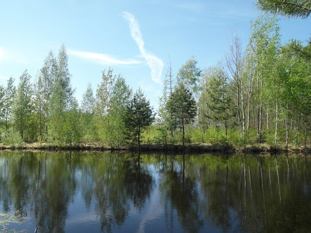 отражение в пруду - Владимир