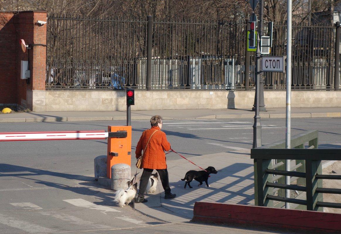 Дама с собачками - Елена