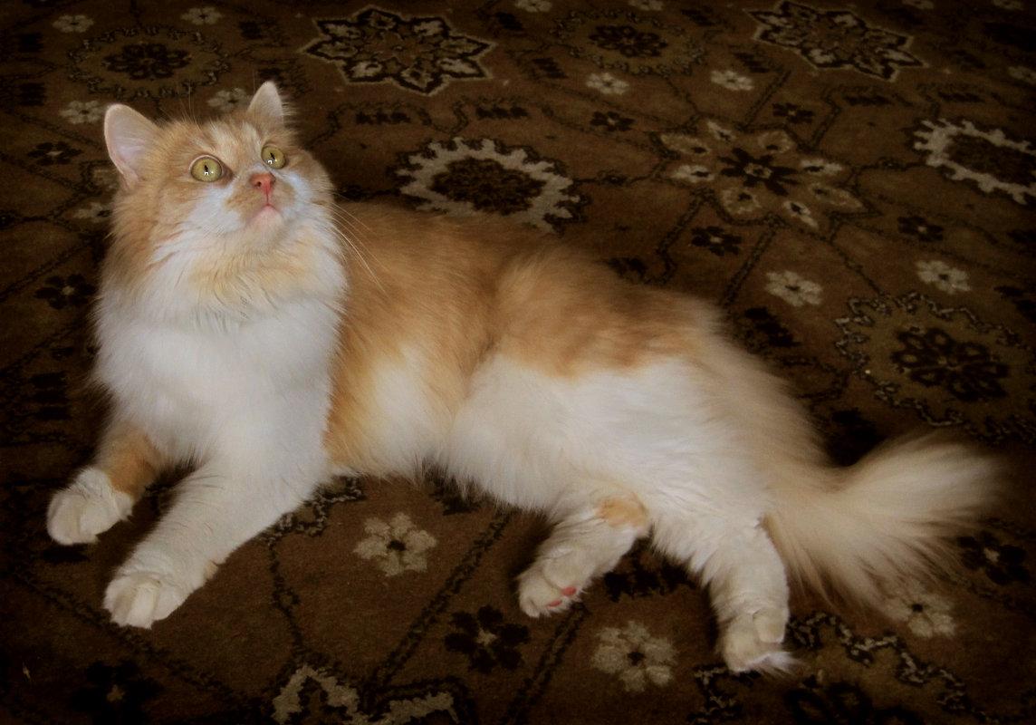 Кошка Алиса. фото-3. - Nata